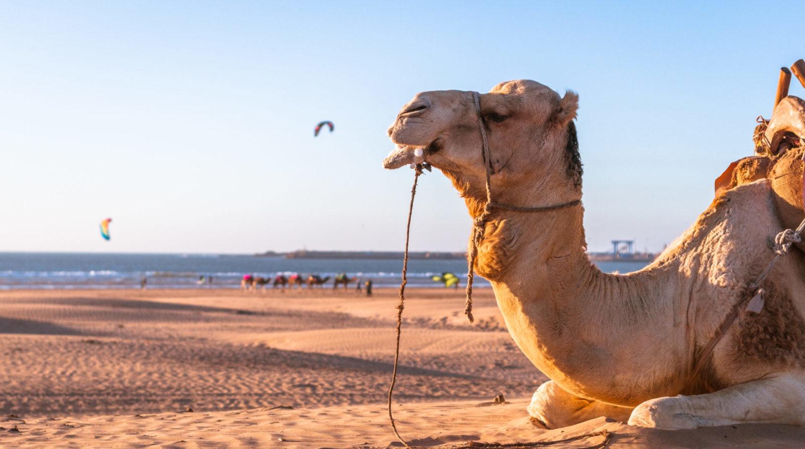 Loving surf school camp essaouira morocco